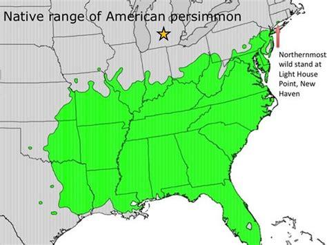 persimmon native range american eaton rapids joe horned nesting rectangle owl pair lower block south