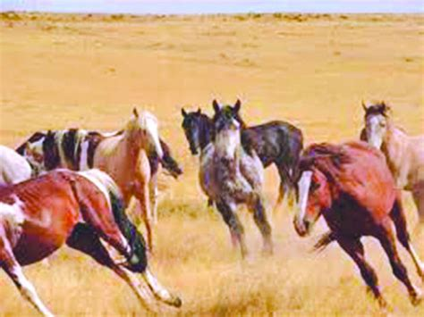 montana horses wild horse ranch herd concerns neighbor missoulian ad close billingsgazette