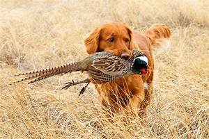 5 Best Bird Dogs You Should Bring With You On Your Hunting ...