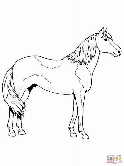 Horse Coloring Pages Paint Sheet Paso Pinto