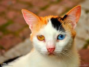 different cats cat the bio infos