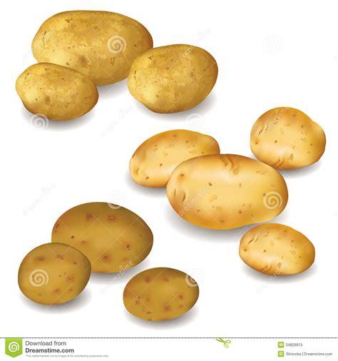set  vegetables potatoes  white royalty  stock