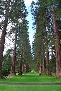 Giant, Redwood, U2013, Botanics, Stories