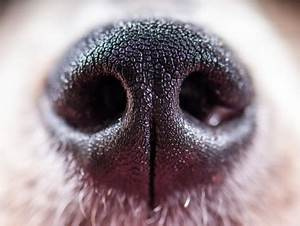 Why Do Dogs Have Wet Noses? | petMD