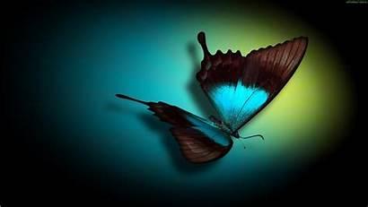 Teal Wallpapers Butterfly Desktop Pretty Wallpapersafari 3d