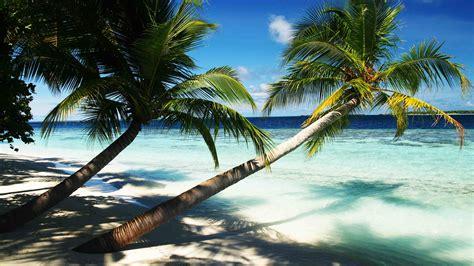 wallpaper maldives 4k 5k wallpaper holidays palms