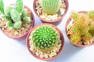 Comment Entretenir Un Cactus : 6 conseils pour bien entretenir un cactus astuces de ~ Nature-et-papiers.com Idées de Décoration