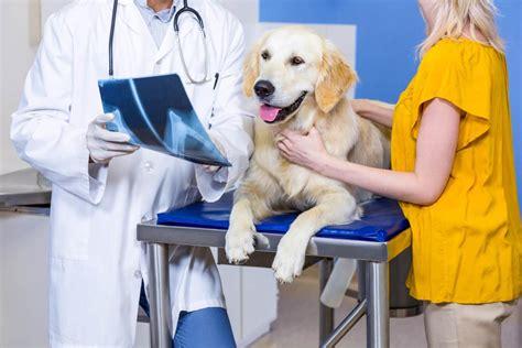 gelenkerkrankungen arthrose hundde