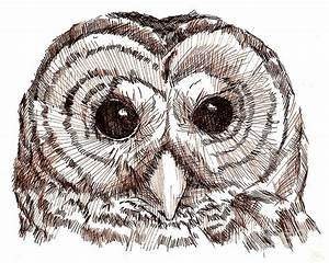 Image Gallery ink drawing owl