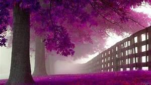 purple nature wallpaper AC0