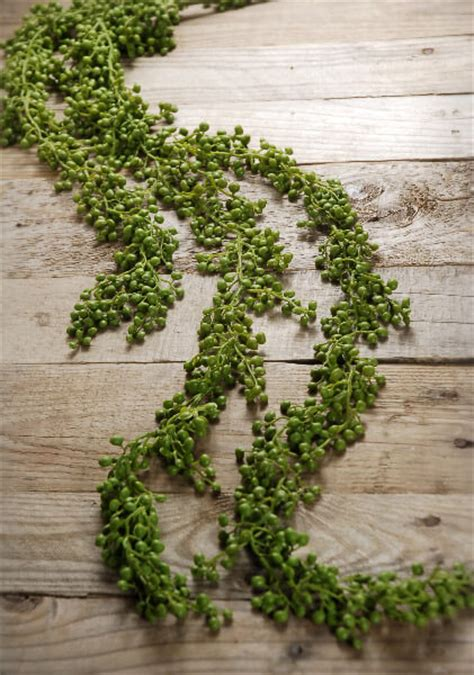 a strand of greenery hung as decoration string of pearls succulent garland 4ft