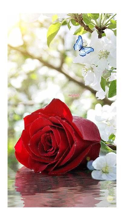 Flores Hermosas Hermosos Encontradas Gifs