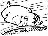 Barking Dog Drawing Coloring Getdrawings Pages sketch template