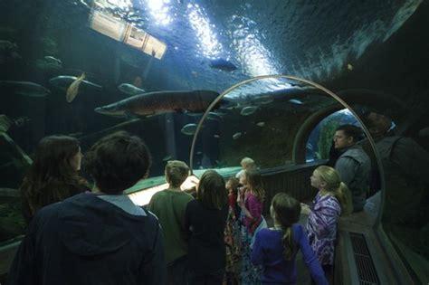 sea minnesota aquarium fish aquarium minneapolis skyline aquarium middle c joe curry 2017 fish tank maintenance