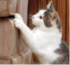 how to keep cats from scratching leather furniture cat scratch resistant upholstery fabric