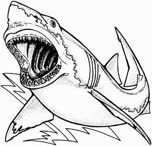 Unique Whale Shark Coloring Page Cool Ideas for You 7088 ...