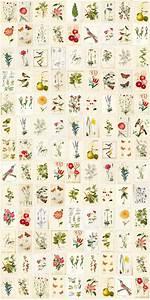 hochwertige tapeten und stoffe wandbild vlies eijffinger With katzennetz balkon mit pip studio botanical garden