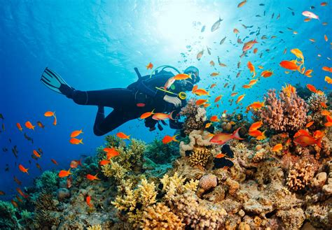 STEMExplore Live Event with a Marine Biologist ...