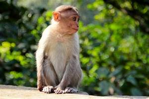 What Are Some Interesting Facts About Monkeys Joy Of