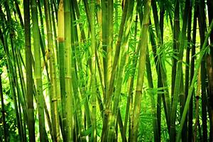 a, bamboo, hedges, as, a, noise, barrier