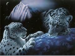 White Tiger Wallpaper Tigers Picture Bengal With Blue Eyes 3d