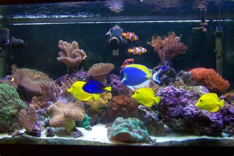 salt water fish tank do your homework better and faster