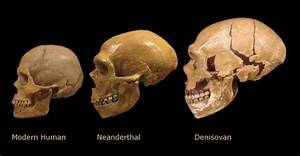 Tooth Treasure- Diversity of Human like species - News ...