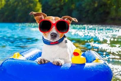 Summer Animals Evolve Busy Fun Animal Solstice