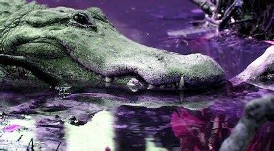 il coccodrillo come fa testo canzone il coccodrillo come fa testo della canzone e you