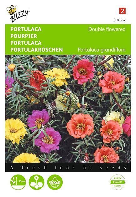 portulak pflanzen kaufen portulak blumensamen kaufen garten saatgut de