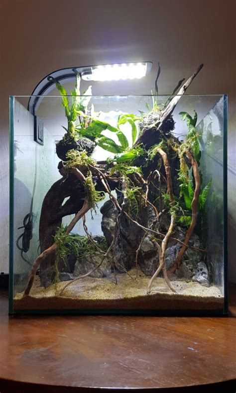shrimp tank aquascape theme aquascape fish shrimp tank pet supplies for