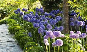 Graines D Agapanthe : le jardin agapanthe jardin contemporain en normandie ~ Melissatoandfro.com Idées de Décoration