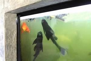 Welche Fische Passen Zusammen Aquarium : aquarium im innenbereich als highlight mit knappem budget ~ Lizthompson.info Haus und Dekorationen