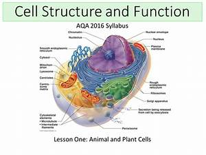 New Aqa  2016  Biology B1 - Cell Structure And Transport  Lesson 1