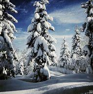 Breathtaking Winter Landscapes Christmas