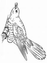 Coloring Pages Cuckoo Birds Cuckoos Printable Mycoloring Recommended sketch template