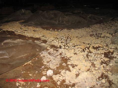 significance treatment  mold  dirt  crawl