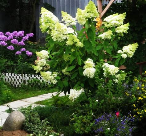 hydrangea garden design 22 bright garden design ideas accentuating lush greenery with colorful hydrangeas