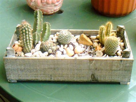comment entretenir un cactus en pot comment planter cactus pot