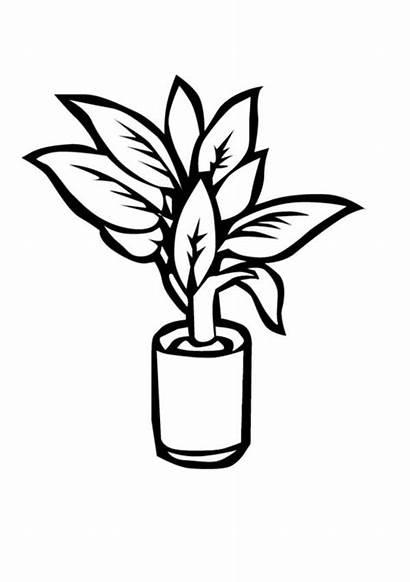 Coloring Plants Vase Sheet