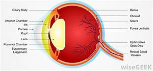 Optic Nerve Eye Diagram