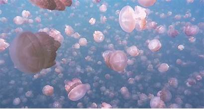 Jellyfish Gifs Aesthetic Nature Coral Giphy Animated