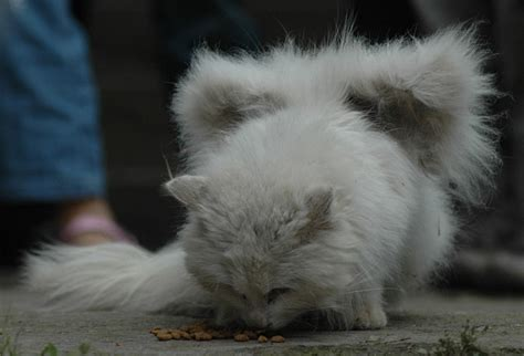 cats with wings don t get in a flap it s just a cat with wings