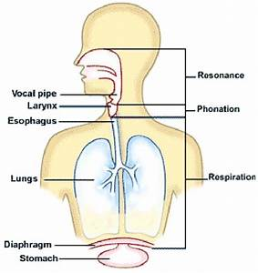 1  Stages Of Voice Production  Source  Anatomy And