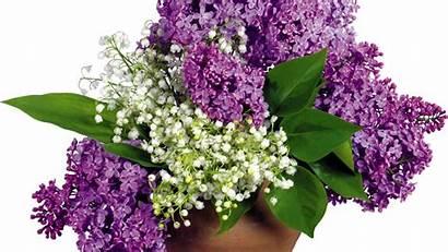 Lilac Flowers Valley Flower Lilys Leaves Vase
