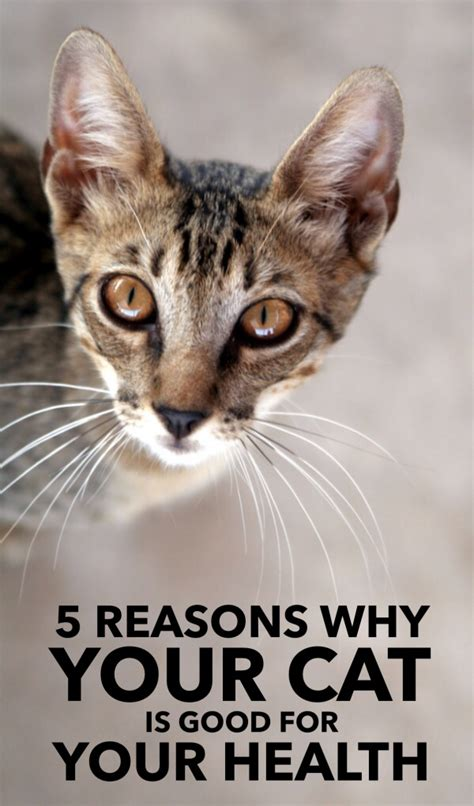 cat health why reasons pawesomecats owners cats prevent loneliness