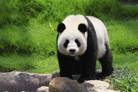 zoo zoos animals 10best awards travel usa toledo ten ohio