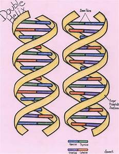Our Genetic Code Is Stored As A Sequence Of Different