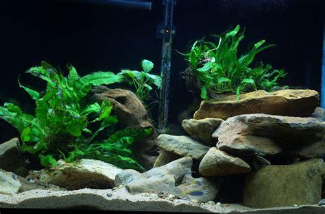 Aquascaping Cichlid Aquarium by Cichlids Aquascape In My 55 Gallon Mbuna Tank