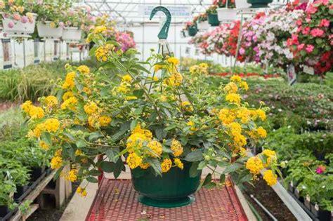 jenis tanaman hias gantung tahan panas tokopedia blog